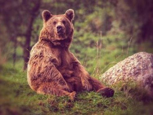 Охота на медведя в Кировской области